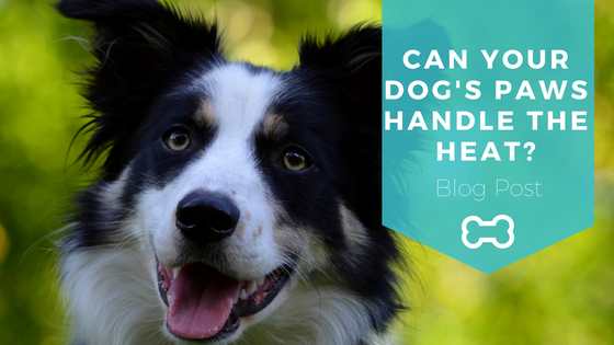 Tips and Tricks for Keeping Your Dog's Paws Safe This Summer